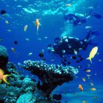 Life Below the Surface: Why You Must Scuba Dive