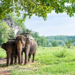 Volunteer tourism in Thailand: Contributing to the Happiness of Others