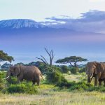 Spot Your Wild Side On A Kenyan Safari