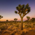Outside Los Angeles - Fun Things to do in Joshua Tree
