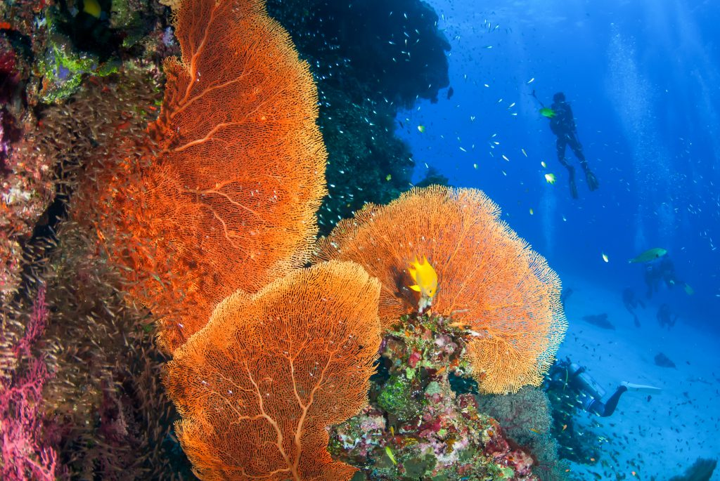 Beautiful Sea Fan in North Andaman, Thailand