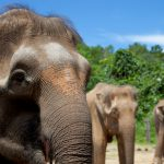 5 Wildlife Dens To Visit | Sabah | Malaysia