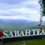 Why Sabah Tea Garden Is The Best Place To Visit For Tea Lovers