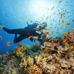 Finding Nemo – Marine Life in Sabah l Malaysia
