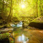 50 Shades of Green l Sabah l Malaysia