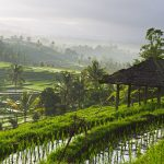 The Artistic Splendour Hidden In Bali's Ubud