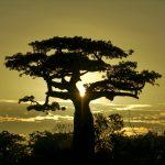 I Like to Move It, Move It | Madagascar