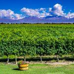 A heady doze of wines | Mendoza, Argentina