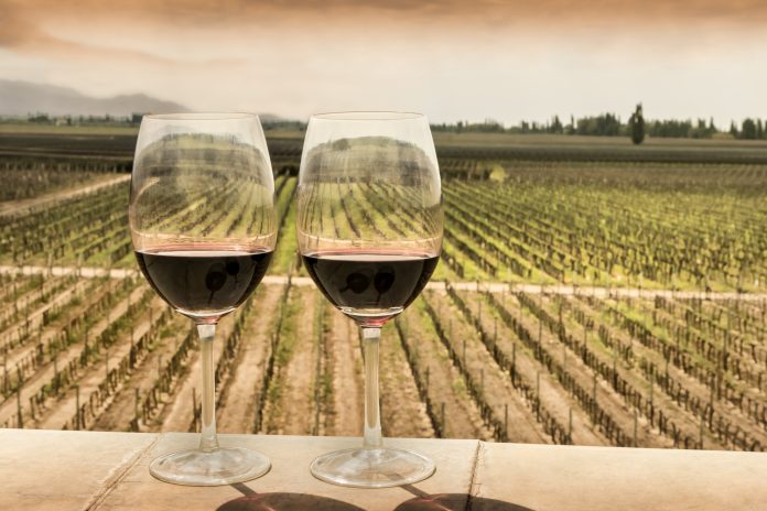 Glasses of red wine and as a background, vineyard crop at sunset. Mendoza, Argentina.