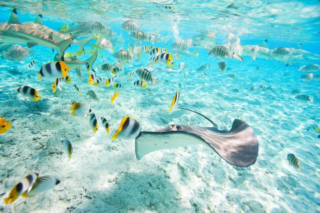 Underwater life at Bora Bora