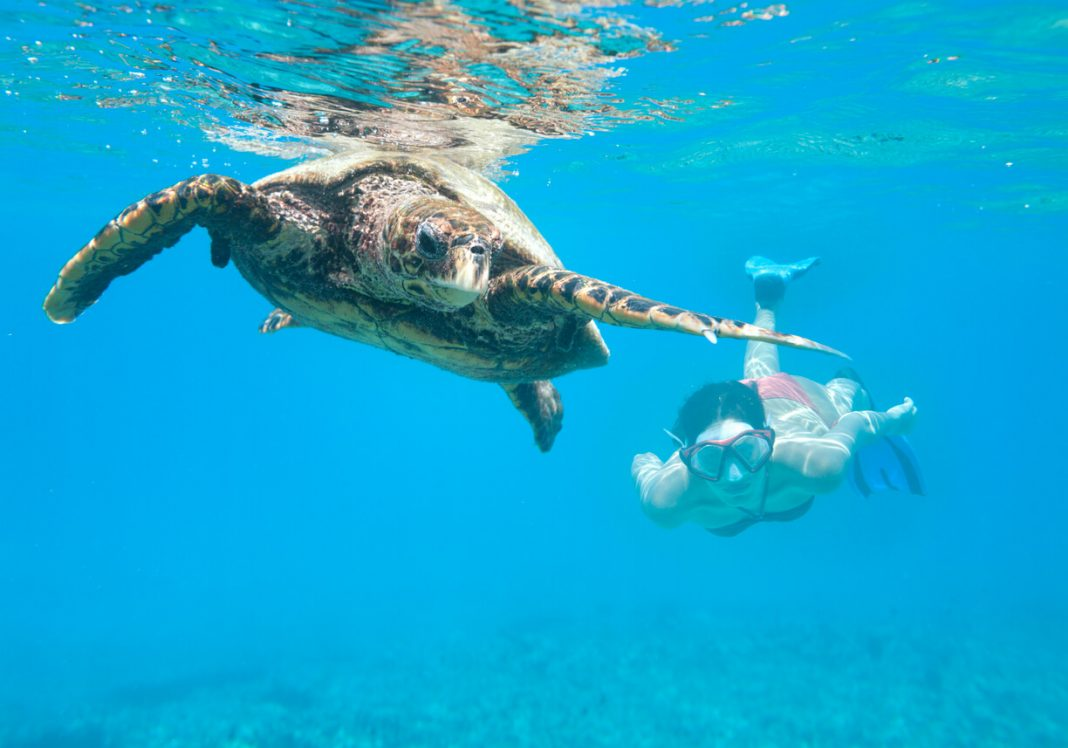 Diving with a Hawksbill Sea Turtle, Seychelles