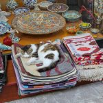 The Feline Conquerors Of Istanbul