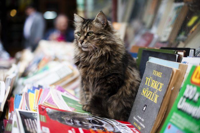 Cat Destinations