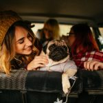 Top Tips For Traveling With Pets (Part 1 – On The Road)