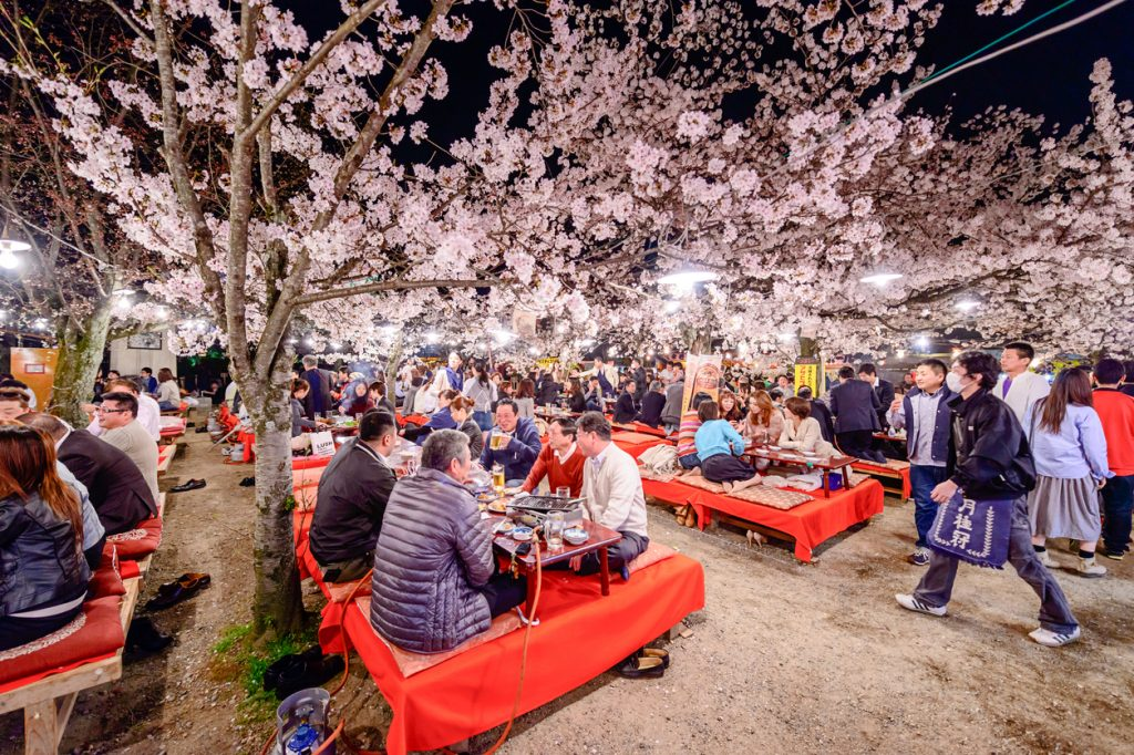 Kyoto, Japan - April 3, 2014: People enjoy the spring season by partaking in nighttime Hanami festivals in Maruyama Park. The annual festivals are held outdoors to celebrate the changing of the season.