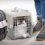 Top Tips For Travelling With Pets (Part 2 – In The Air)