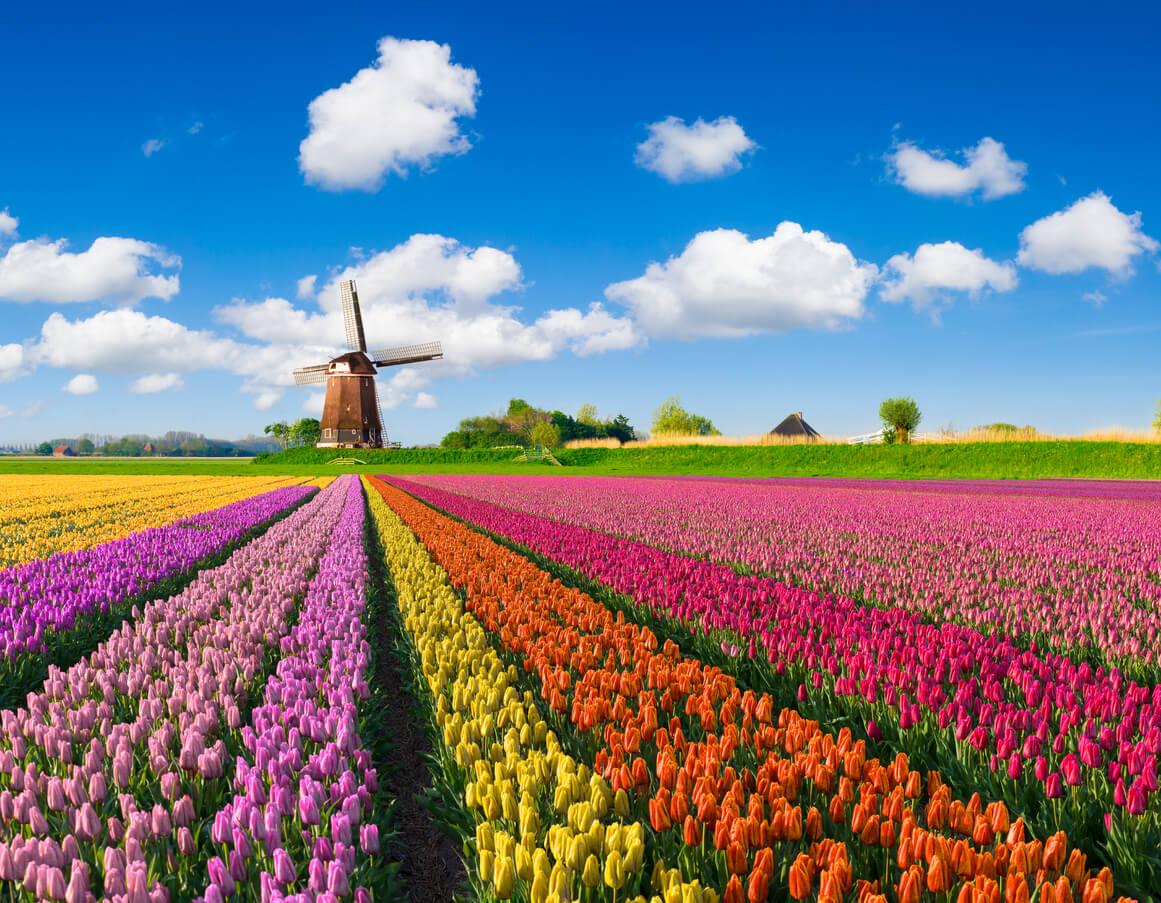 Tulip Season Begins in The Netherlands   Travel.Earth
