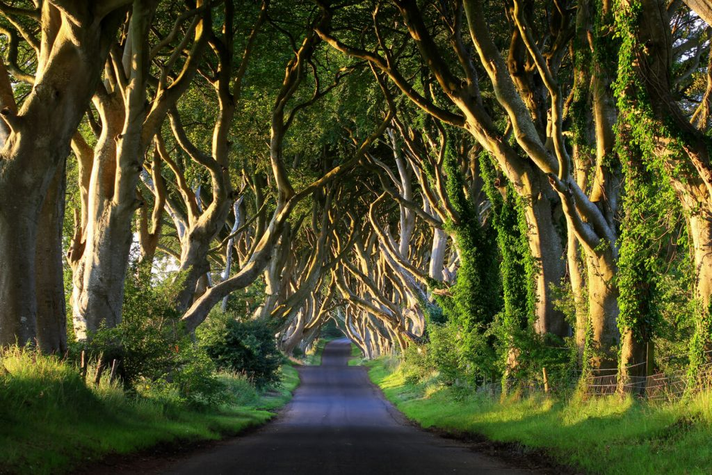 dark hedges northern ireland, most beautiful places in UK