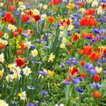 11 Beautiful Places to See Flowers This Spring