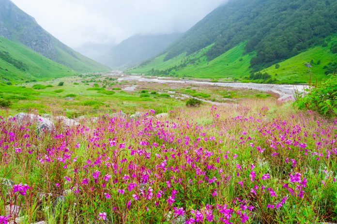 Valley of Flowers the scenery is breathtaking, uttarakhand india, places to visit in India during monsoon