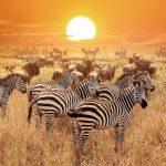 Touring Serengeti National Park - Kenya or Tanzania?