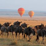6 Reasons to Visit Tanzania – The Ultimate Safari Destination