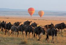 View the Great Wildebeest Migration through a hot air balloon safari