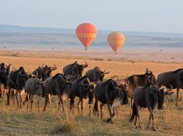 View the Great Wildebeest Migration through a hot air balloon safari