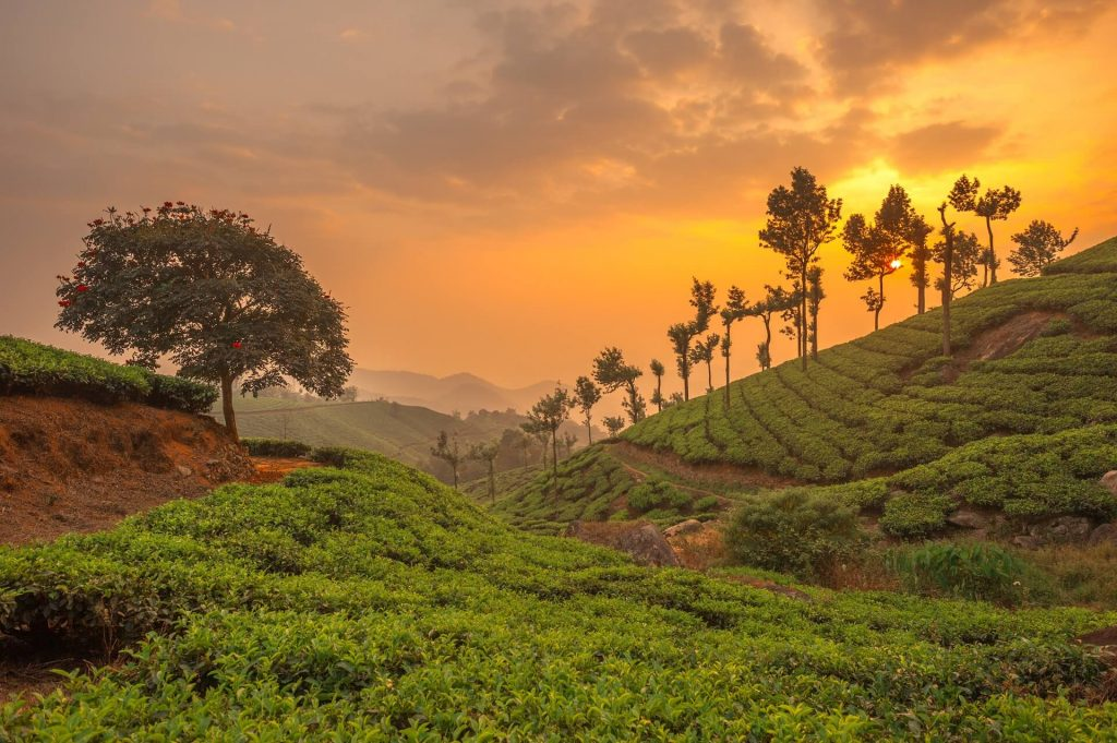 Tea plantations in Munnar, Family Vacations