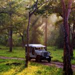 Top 5 Most Beautiful Places In India To Lose Yourself In Nature
