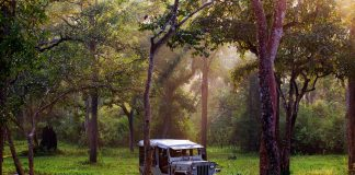 Take a jeep safari at Nagarhole in Coorg