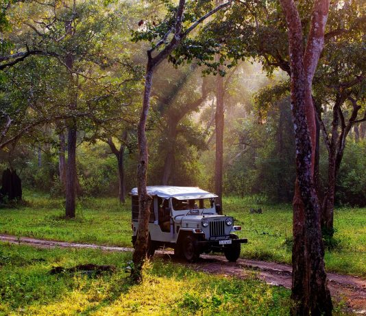 Take a jeep safari at Nagarhole in Coorg