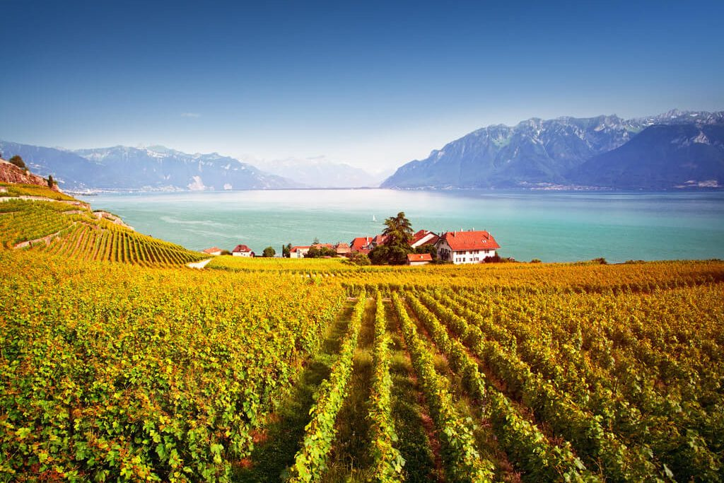 Vineyard, Switzerland