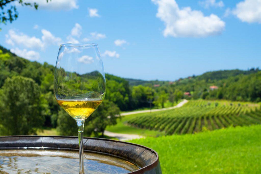 Vineyard, Croatia Wine