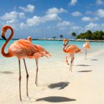 The Ultimate Couples' Destination: Aruba for Two