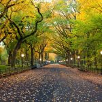 No More Cars in New York's Central Park?