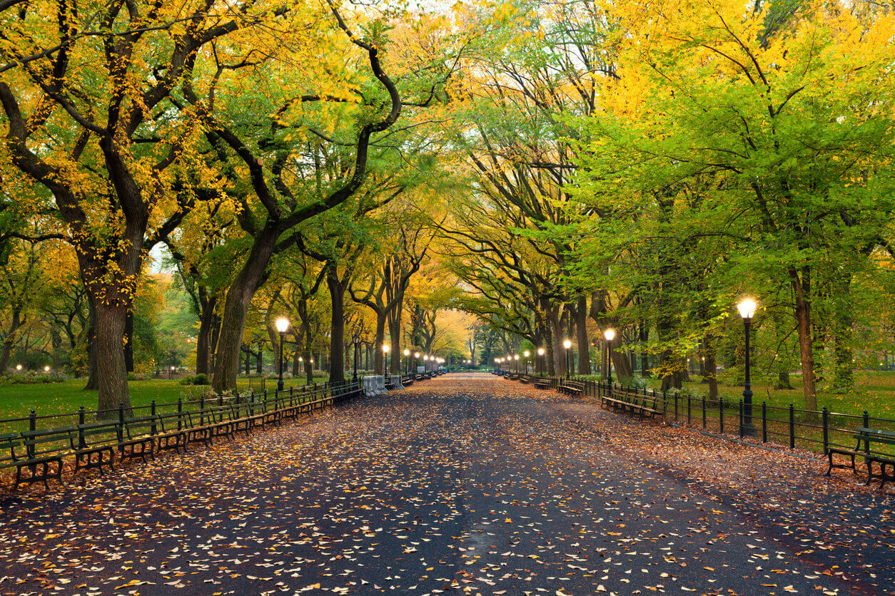 No More Cars in New Yorks Central Park?   Travel.Earth