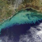 Marine Dead Zones Threaten Life In The Oceans