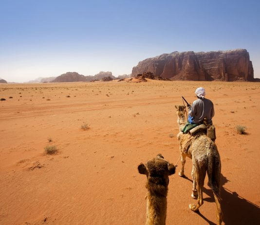 Traveling by Camel in Wadi Rum Desert, Jordan