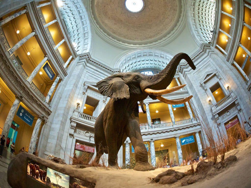 Elephant Exhibit inside the Smithsonian Museum, Washington DC, USA