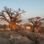 11 Reasons To Visit Botswana This Year