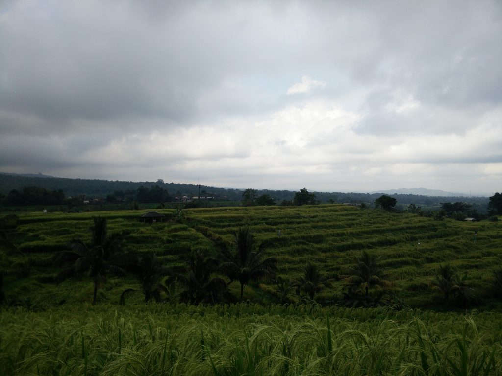 Rice fields in Bali on a cloudy day