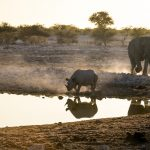 Sustainable Travel in Botswana Helps Fight Poaching