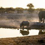 Sustainable Travel in Botswana Helps Fight Poaching