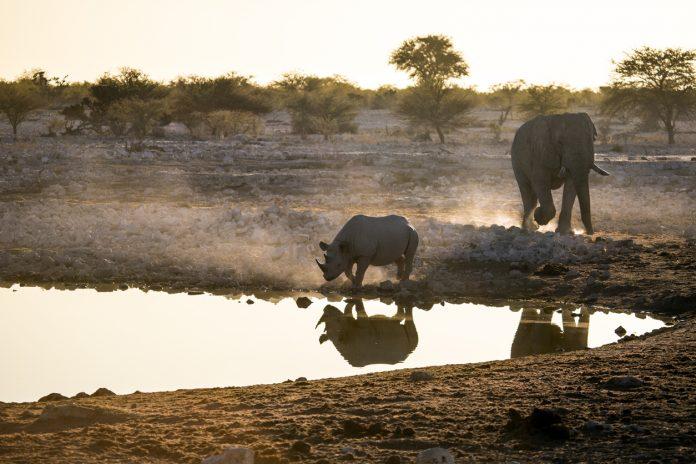 Okaukuejo Water Hole Botswana