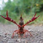 Crayfish Flood Berlin's Restaurants This Summer