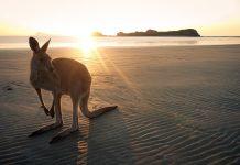 Australia Kangaroo Wallaby, Virtual Australia Experiences