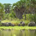 Botswana Legalizes Hunting Elephants, Faces Severe Backlash