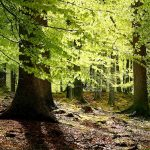 Denmark Sees The Opening Of Its Fifth National Park