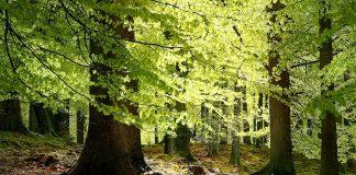 Denmark Gribskov Forest